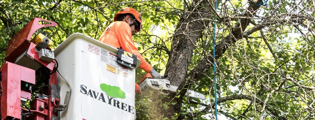 Arborist Consultations-Lantana Tree Trimming and Tree Removal Services-We Offer Tree Trimming Services, Tree Removal, Tree Pruning, Tree Cutting, Residential and Commercial Tree Trimming Services, Storm Damage, Emergency Tree Removal, Land Clearing, Tree Companies, Tree Care Service, Stump Grinding, and we're the Best Tree Trimming Company Near You Guaranteed!