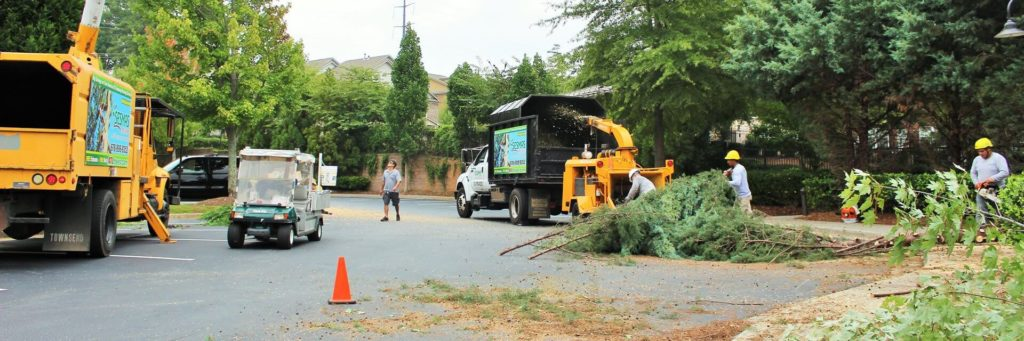 Commercial Tree Services-Lantana Tree Trimming and Tree Removal Services-We Offer Tree Trimming Services, Tree Removal, Tree Pruning, Tree Cutting, Residential and Commercial Tree Trimming Services, Storm Damage, Emergency Tree Removal, Land Clearing, Tree Companies, Tree Care Service, Stump Grinding, and we're the Best Tree Trimming Company Near You Guaranteed!