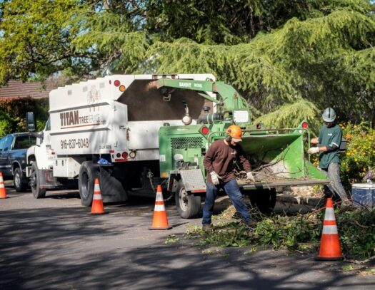 Residential Tree Services-Lantana Tree Trimming and Tree Removal Services-We Offer Tree Trimming Services, Tree Removal, Tree Pruning, Tree Cutting, Residential and Commercial Tree Trimming Services, Storm Damage, Emergency Tree Removal, Land Clearing, Tree Companies, Tree Care Service, Stump Grinding, and we're the Best Tree Trimming Company Near You Guaranteed!
