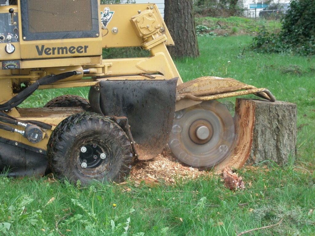 Stump Grinding-Lantana Tree Trimming and Tree Removal Services-We Offer Tree Trimming Services, Tree Removal, Tree Pruning, Tree Cutting, Residential and Commercial Tree Trimming Services, Storm Damage, Emergency Tree Removal, Land Clearing, Tree Companies, Tree Care Service, Stump Grinding, and we're the Best Tree Trimming Company Near You Guaranteed!