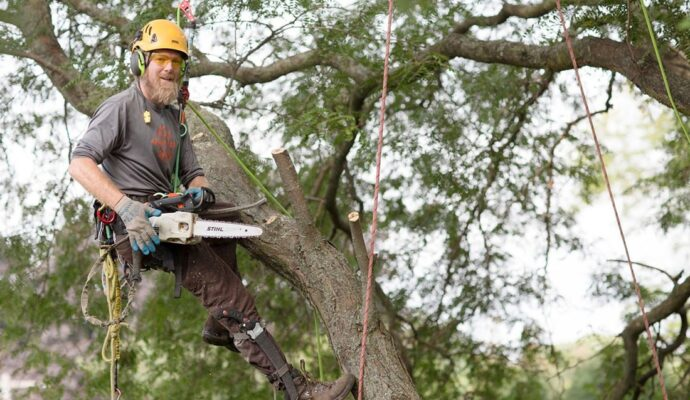Tree Cutting-Lantana Tree Trimming and Tree Removal Services-We Offer Tree Trimming Services, Tree Removal, Tree Pruning, Tree Cutting, Residential and Commercial Tree Trimming Services, Storm Damage, Emergency Tree Removal, Land Clearing, Tree Companies, Tree Care Service, Stump Grinding, and we're the Best Tree Trimming Company Near You Guaranteed!