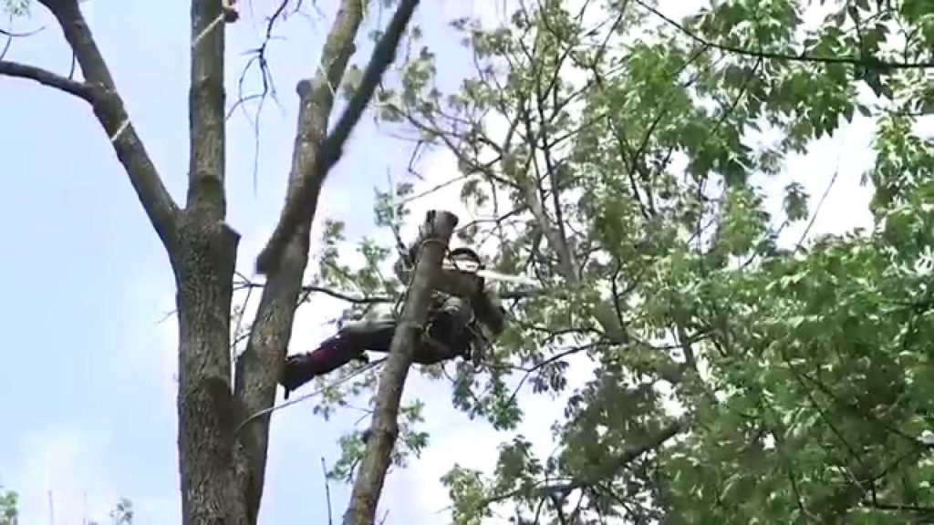 Tree Removal-Lantana Tree Trimming and Tree Removal Services-We Offer Tree Trimming Services, Tree Removal, Tree Pruning, Tree Cutting, Residential and Commercial Tree Trimming Services, Storm Damage, Emergency Tree Removal, Land Clearing, Tree Companies, Tree Care Service, Stump Grinding, and we're the Best Tree Trimming Company Near You Guaranteed!