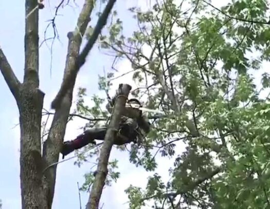Tree Pruning & Tree Removal-Lantana Tree Trimming and Tree Removal Services-We Offer Tree Trimming Services, Tree Removal, Tree Pruning, Tree Cutting, Residential and Commercial Tree Trimming Services, Storm Damage, Emergency Tree Removal, Land Clearing, Tree Companies, Tree Care Service, Stump Grinding, and we're the Best Tree Trimming Company Near You Guaranteed!