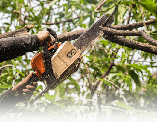 Tree Trimming Services-Lantana Tree Trimming and Tree Removal Services-We Offer Tree Trimming Services, Tree Removal, Tree Pruning, Tree Cutting, Residential and Commercial Tree Trimming Services, Storm Damage, Emergency Tree Removal, Land Clearing, Tree Companies, Tree Care Service, Stump Grinding, and we're the Best Tree Trimming Company Near You Guaranteed!